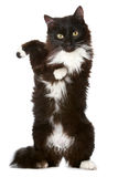 Black cat on a white background. Black cat in front of a white background royalty free stock photo