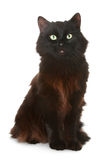 Black cat on a white background. Black cat in front of a white background stock images