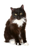 Black cat on a white background. Black cat in front of a white background stock photo