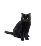 Black cat on white background Royalty Free Stock Photography