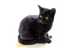 The black cat Royalty Free Stock Photography