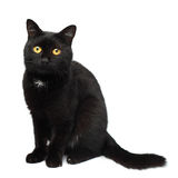 Black cat. On white background stock photos
