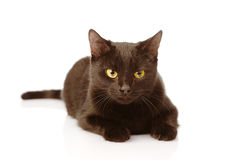 Black Cat.  on white background Royalty Free Stock Photography