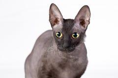 Black cat. stock photo