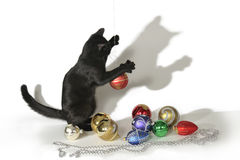 Black cat on a white background playing with toys. Royalty Free Stock Photo
