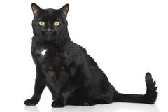Black cat on white background Stock Images
