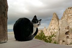Black cat. Black and white cat curiously looking in Cappadocia Royalty Free Stock Photography