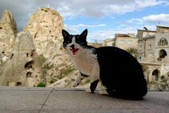 Black cat. Black and white cat meowing in Cappadocia Royalty Free Stock Photo