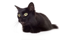 Black cat on white Stock Photos