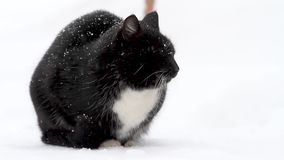 Black cat on white snow. Pets, bad weather and frost stock video
