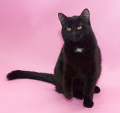 Black cat with white spot on the chest sitting Stock Photos