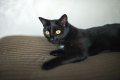 Black cat is lying on the bed royalty free stock image