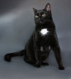 Black cat with white spot sits on gray. Background Stock Images