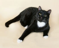 Black cat with white spots lying on yellow Royalty Free Stock Photos