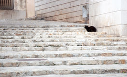 Black cat on white staircase. Royalty Free Stock Image