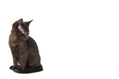 Black cat on white. Black cat or tomcat watching something with big curiosity, isolated, copyspace Stock Photo