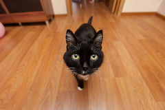 Black cat on a wide angle. Black cat on a corner in the room Royalty Free Stock Photography