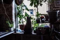 A black cat on the window. Hipster cat in a hipster flat on a hipster window royalty free stock photography