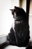 Black cat on a windowsill Stock Images