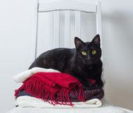 Black cat with winter clothes on a chair stock image