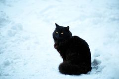 Black cat in the winter on white snow. Black cat sitting on white snow in winter royalty free stock photography