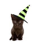 Black Cat in Witch Hat. A cute black kitten wearing a green and black Halloween witch hat Royalty Free Stock Photos