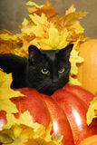 Black Cat Witch Royalty Free Stock Image