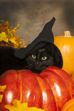 Black Cat Witch Royalty Free Stock Photo