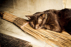 Black cat with witches broomstick Royalty Free Stock Photo