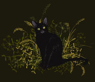 Black cat in a withered grass. Vector illustration. Hand drawing of a black cat in a withered grass. On a black background Royalty Free Stock Photos