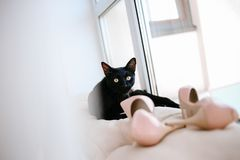 Black cat women shoes looks closely. Black cat looks closely with women shoes on a window royalty free stock photography