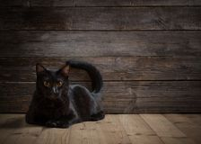 Black cat on wooden background Stock Images