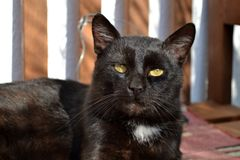 Black cat. On wooden bench stock images