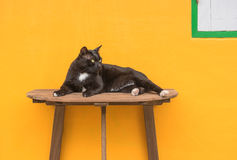 Black cat on a wooden table and Yellow background . Royalty Free Stock Photos