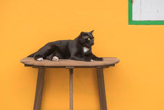 Black cat on a wooden table and Yellow background . Royalty Free Stock Image