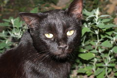 Black cat. In the yard Stock Photography