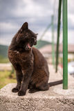 Black Cat Yawn Stock Photos