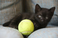 Black cat with yellow ball Royalty Free Stock Photography