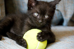 Black cat with yellow ball Stock Image