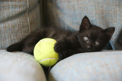 Black cat with yellow ball Royalty Free Stock Photos