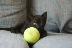 Black cat with yellow ball Stock Images