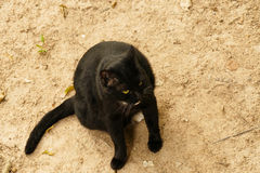 Black cat with yellow eye Stock Photography