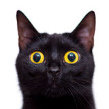 Black cat. With yellow eyes Stock Photos