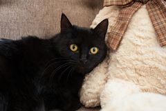 A black cat with yellow eyes with fear looks at you. Mental and emotional problems of cats stock photos