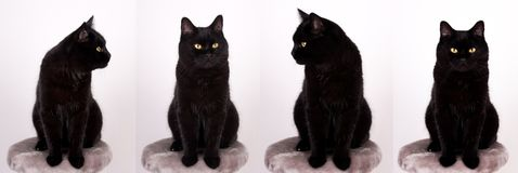 Black Cat Black cat with yellow eyes isolated on white.  Stock Images