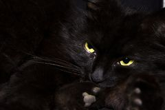 Black cat on black background Royalty Free Stock Images
