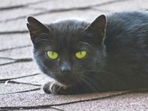 Black Cat with Yellow Eyes Looking and Staring while Hunting on Roof royalty free stock photos