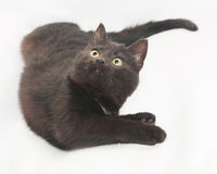 Black cat with yellow eyes lying, bent Royalty Free Stock Photography