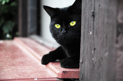 Black cat guarding the house. Black cat with yellow eyes lying in the door Royalty Free Stock Images