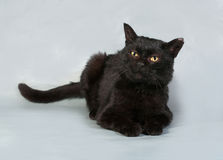 Black cat with yellow eyes lying on gray Stock Photography